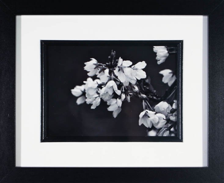 "191 ""Blossoms"" by Josiah Perino"