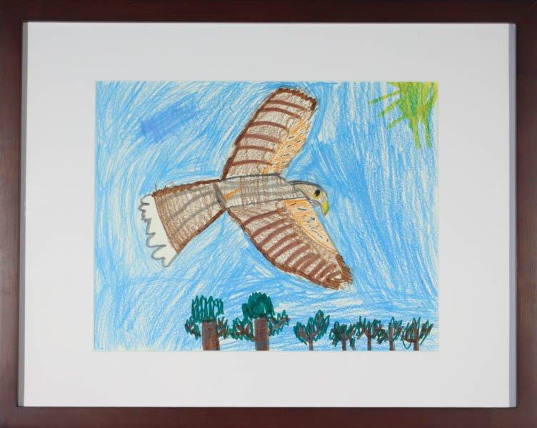"199 ""Adult Harris's Hawk"" by Sam Beadle"