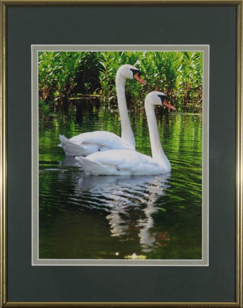 """465 """"Mute Swans"""" by Susan Leri"""