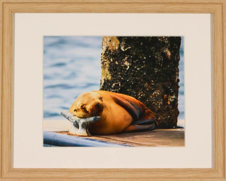 "528 ""Sun Bathing"" by Maggie Rutkowski"