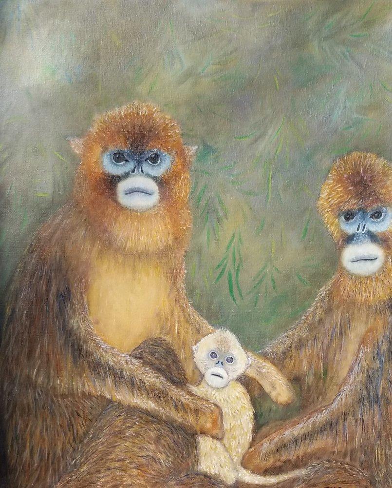 1619191919_375_timon_golden-monkeys.jpg