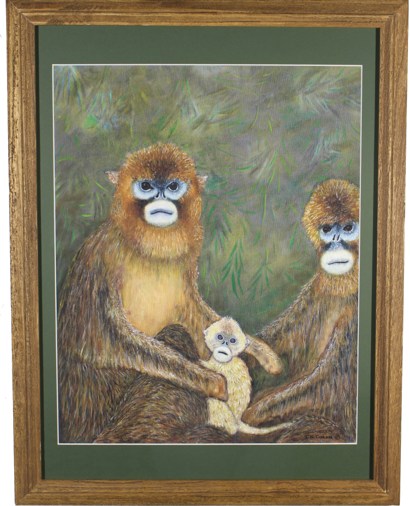 1619191920_375_timon_1_png.png